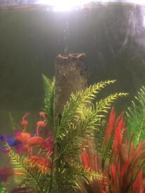 biorb 60ltr fish tank/bowl