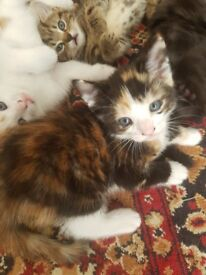 Great choise of playful kittens