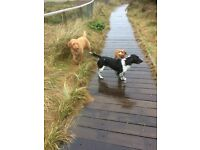 Recommended Dog Walker covers Southbourne,Christchurch, Mudeford,Highcliffe & surrounding areas
