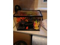 Fish tanks starter kit excellent condition only a year old looking for £15 ono