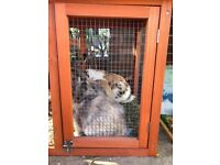 Three Rabbits with hutch and run for Sale