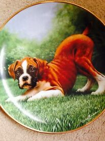 "Boxer Dog Collectible Plate ""Bottoms Up"" by Danbury Mint"