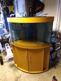 190 litre corner aquarium