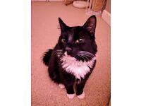 Missing male cat kitten ls26