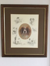 Springer Spaniel limited edition signed print by Mick Cawston
