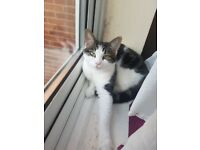 Playful Cat to be rehomed