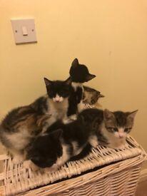 6 lovely kittens looking for loving home
