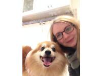 Dog Walkers/Pet Sitters - Individual Dog walks from £8 - Dog Walking/Pet Sitting