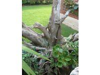 Architectural Tree Stump for Garden/Patio