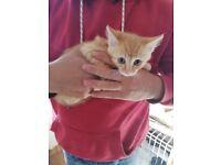 Three farm kittens