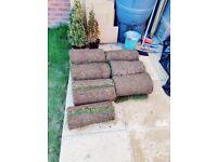 Fresh Turf / Grass roll 1sq m £2 each