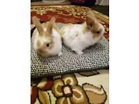 Baby rabbitr