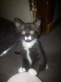 Male kitten looking for his forever home.