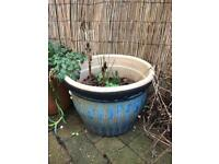 Large pot with spring bulbs and horse chestnut
