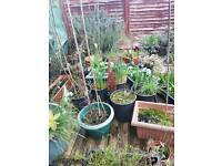 Many pots of differnt garden plants