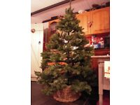 Artificial Christmas Tree Six and a half foot / 2 metres