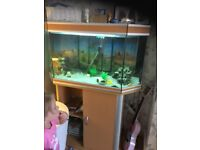 Large tank and unit with about 12 cichlids £ 50
