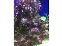 Marine tank 450 litre with sump and all accessories such as tmc v2 illuminaire light