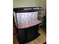 Fish tank 3ft bow front