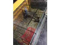 Two baby female gerbils