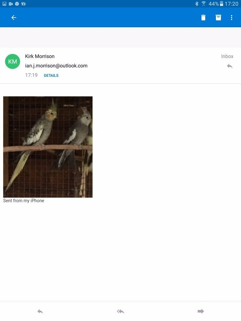 Cockatiels for sale suitable for avairy