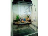 4 litre fish tank