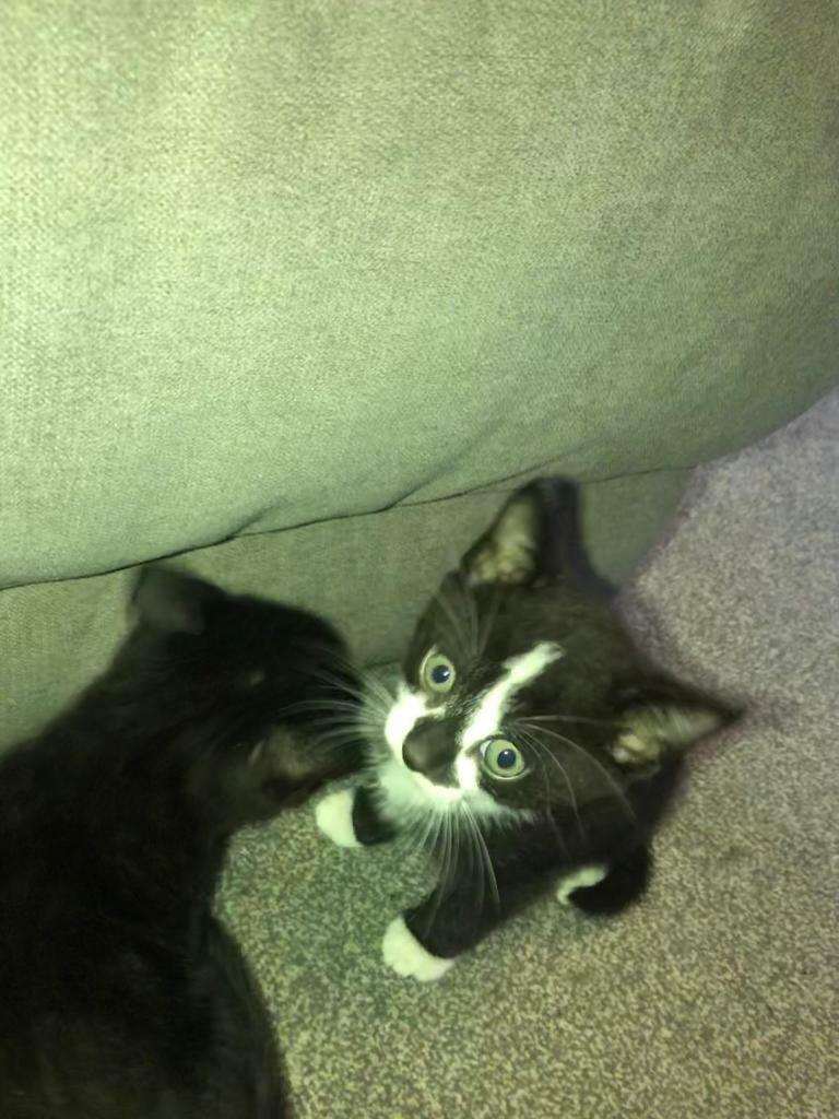 1left 3 Gorgeous Little Kittens In Southampton Hampshire Gumtree