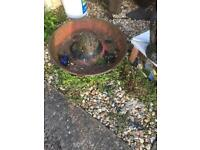 Mexican hat cast iron feeder make lovely planter