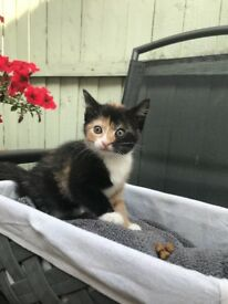 1 beautiful girl kitty left!!!