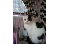 Rescued Female cat (Sarah), 18mths, affectionate but wants to be the only cat in the house.