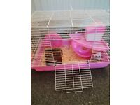2 Russian Dwarf Hamsters FREE TO GOOD HOME inc cage