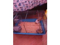 Brown and white Syrian hamster and cage bedding etc