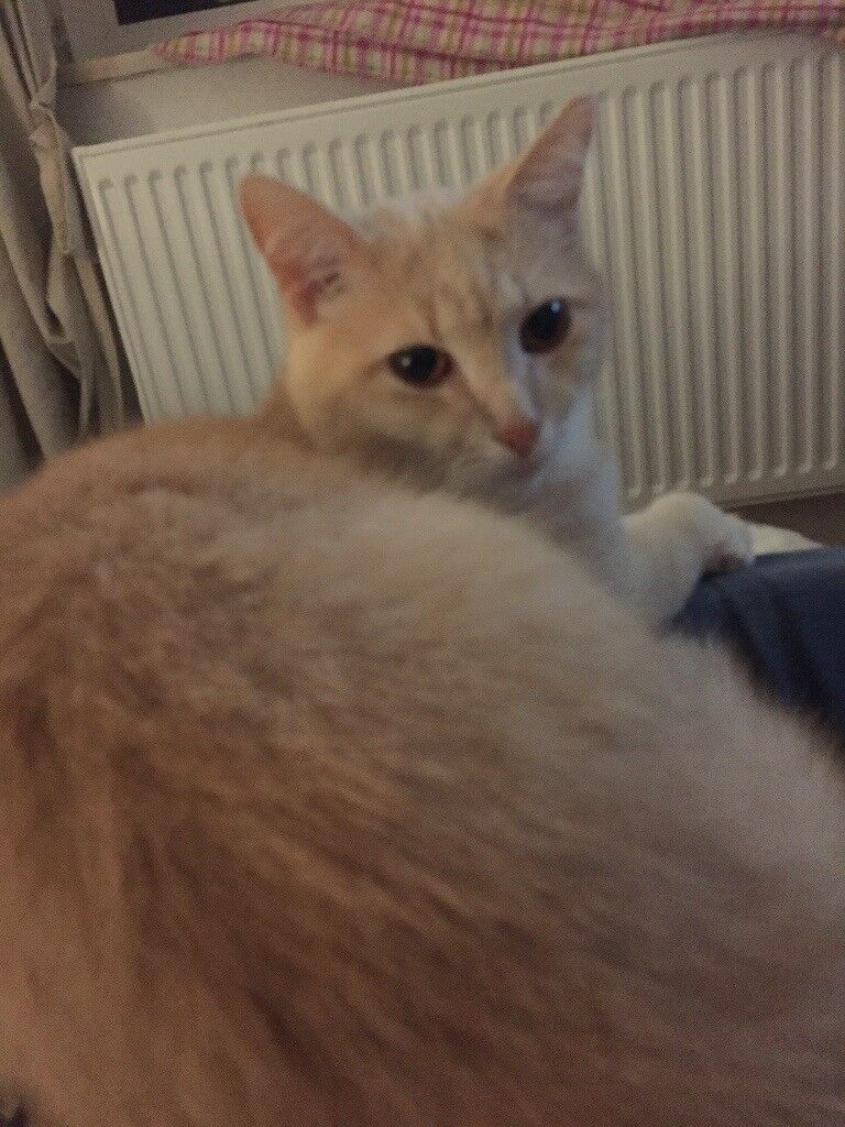 lovely pair of cats sibblings for free looking for nice new