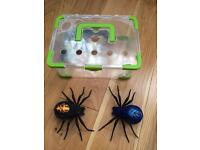 Wild pets Spiders
