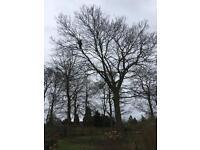 Tree surgeon / arborist