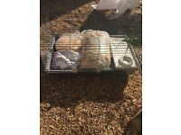 Indoor cage for guinea pig or rabbit