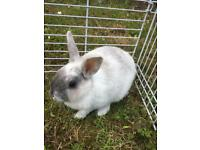Baby Bunny plus indoor hutch included in sale