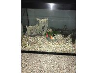 Large Fish tank with stones and filter. Very good condition
