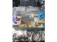 Female Syrian hamster and cage