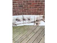 Ikea set of 3 canvas