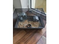 Dwarf hamster and cage for sale