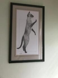 Siamese cat pictures / drawings