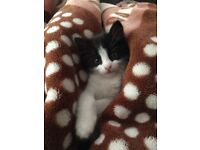 11 Weeks Old Kittens For Sale £100