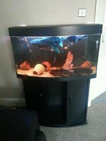 Juwel 180 fish tank- excellent condition