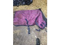 Blue chequed cob travel boots and 5'3 masta stable rug