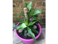 House plant with plastic pot