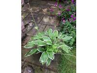 PLANTS FOR SALE - FROM £1