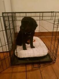 Nearly New Medium-Large Dog Crate