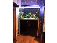 Fish tank and full set up for sale