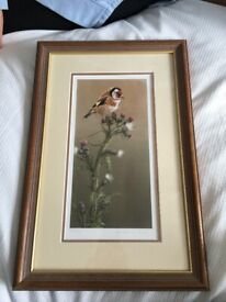 Robert Fuller limited edition print